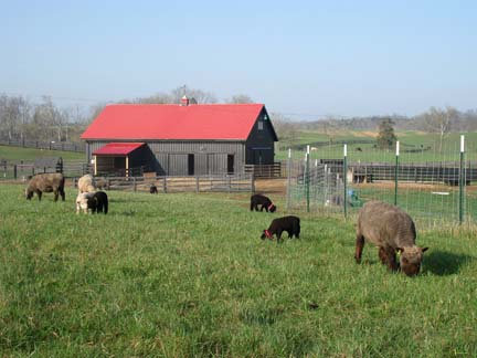 Barn with sheep